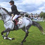 Découvrir le cheval par la pédagogie sensitive - ARAC